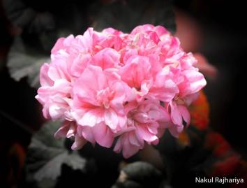 Flower-3926