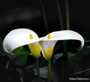 Flower-3934