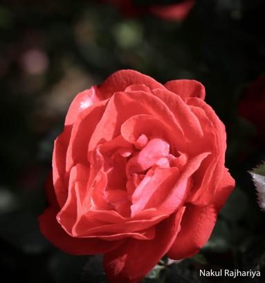 Flower-3945