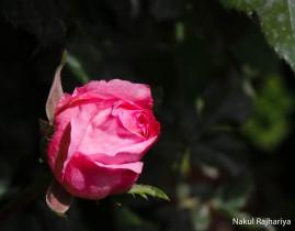 Flower-3948