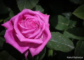 Flower-3950