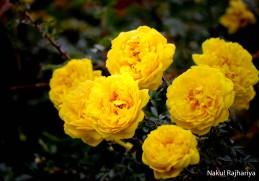 Flower-3994
