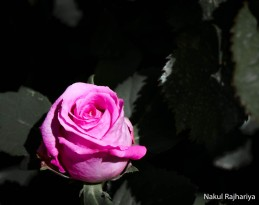 Flower-4137