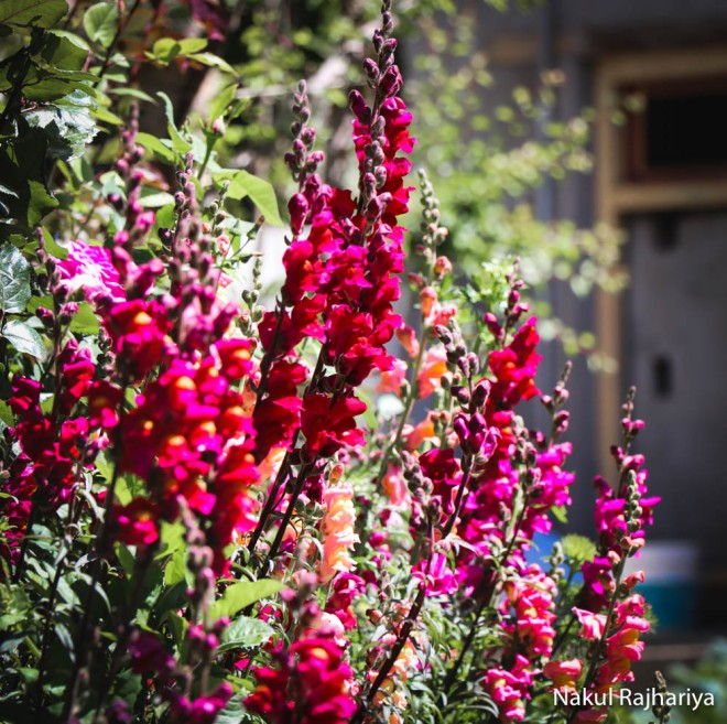 Flower-4152